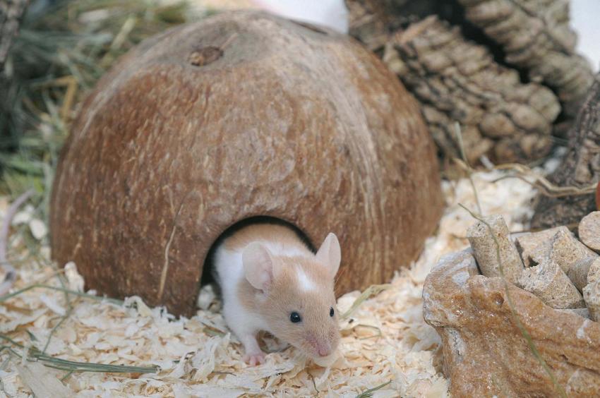 Guarida cáscara de coco Small