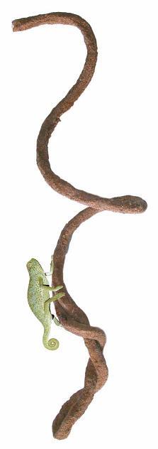 Liana flexible Small aprox. 120cm