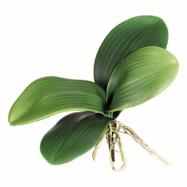 Orquídea aprox. 15cm, 5 hojas
